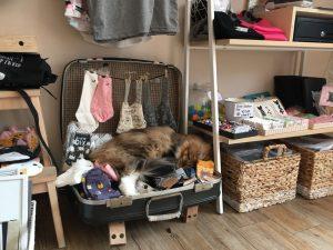Kattencafe Groningen: in een bijzonder koffietentje taart eten Groningen