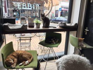 Kattencafe Groningen; overal katten