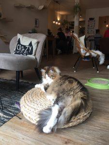 Kattencafe Groningen: Mr BoJangles