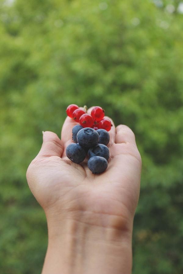 Pluk je eigen fruit in Kardinge tijdens je citytrip Groningen