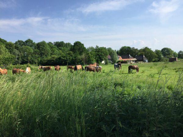 Natuurgebied Reitdiep Groningen tijdens fietstocht