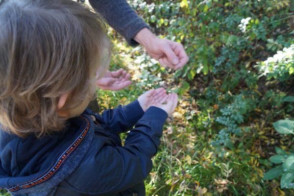 Wildplukken Groningen wandeling Stadspark met wildplukster