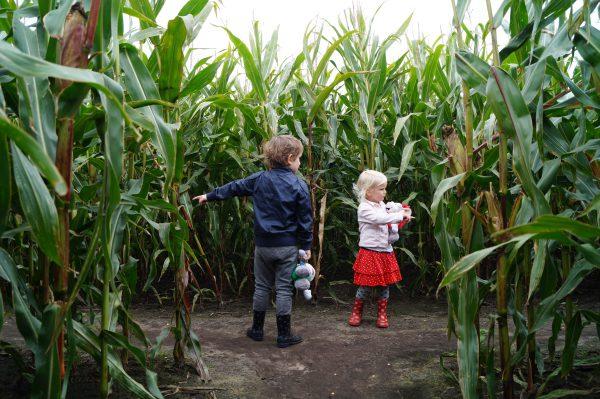 Maisdoolhof Meerstad: gratis en leuk uitje met kinderen in Groningen