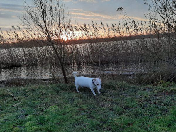 Wandelen met hond in Meerstad Groningen