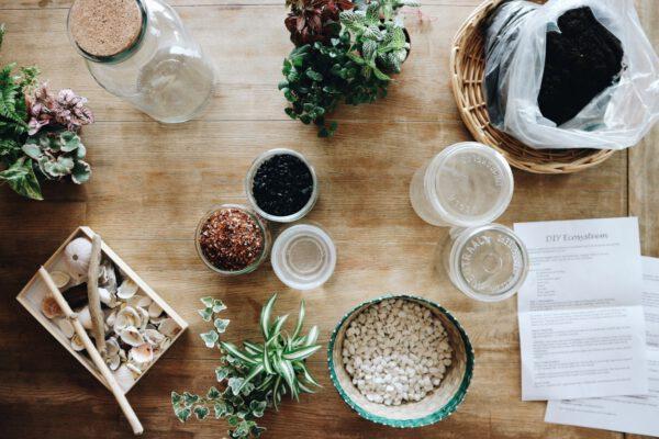 zelf mini ecosysteem maken? DIY pakket met ecosysteem plant bestellen bij De Opfleurist uit Groningen