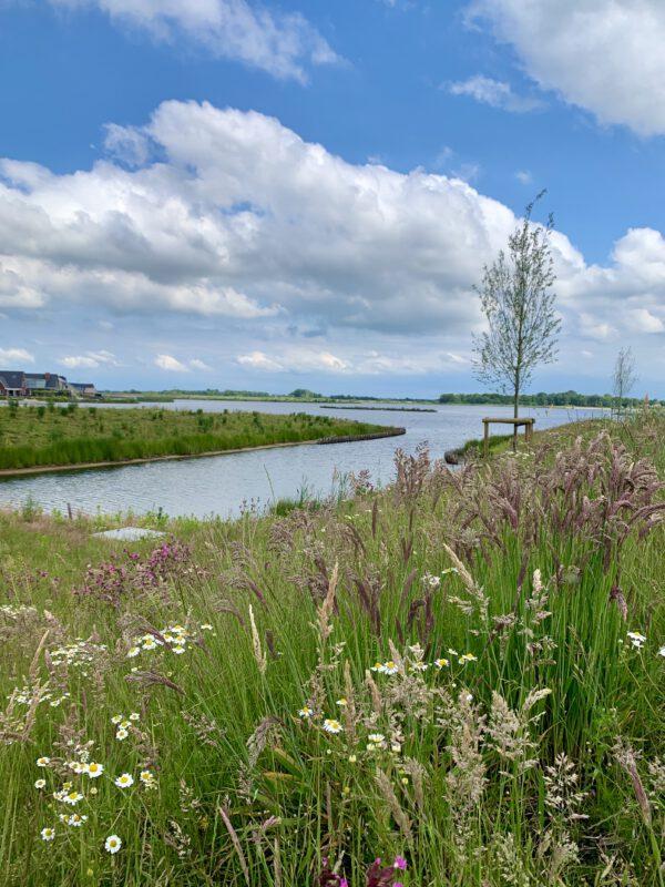Park Meerstad - strand en wilde bloemen