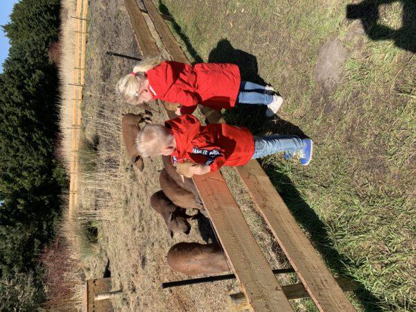 Kinderactiviteiten Groningen herfstvakantie: outdoor tips - foto varkens PlukN