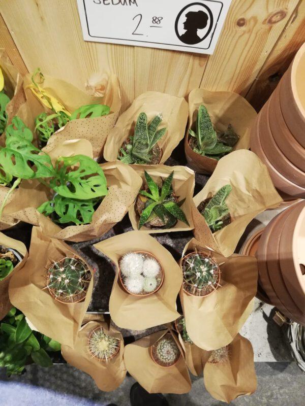 Planten kopen bij de leukste plantenwinkel in Groningen: Søstrene Grene