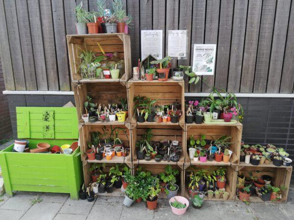 Planten kopen bij de leukste plantenwinkel in Groningen: Plantenbieb Stek 'M